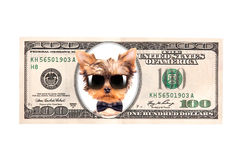Artistic dollar bill with dog president. Background stock images