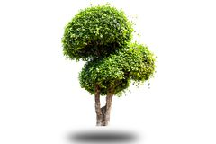 Artistic dwarf of green tree isolated on white background royalty free stock photos