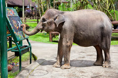 Artistic Elephant. Drawing a picture on elephants show, Bali, Indonesia stock photos