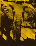 Artistic Elephant background Royalty Free Stock Photos