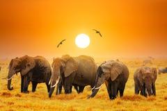 Free Artistic Fantastic African Sunset Landscape. African Elephants In Amboseli National Park. Kenya, Africa At A Sunset Stock Image - 159361421