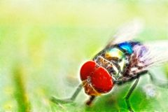 Artistic flies full colour. Ilustrate of flies as art picture Royalty Free Stock Photos