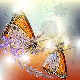Artistic floral background with butterflies Stock Photos