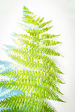Artistic, floral background with colorful fern leaf Stock Photography