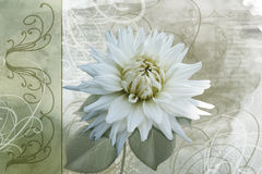 Artistic flower background. With swirls Royalty Free Stock Photography