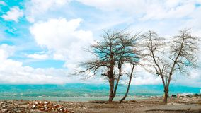 Artistic Formation of Trees royalty free stock photo