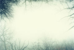 Artistic frame made from leafless trees of a foggy forest.  royalty free stock photo