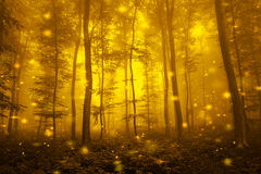 Artistic gold color foggy forest tree fairytale Royalty Free Stock Photo