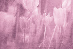 Artistic grunge pink red blurred tulips background Royalty Free Stock Photography