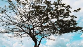 Artistic Grungy Tree in Palu Bay stock image