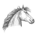 Artistic horse head sketch portrait Stock Photography
