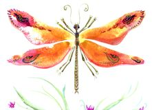 Beautiful dragonfly colorful  artwork Royalty Free Stock Photo