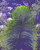 Abstract Green Large Leaf Illustration - Fir or Pine Tree stock images