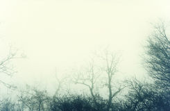Artistic image of a mysterious bare forest with fog Stock Photo