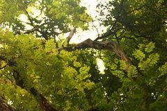 ARTISTIC IMAGE OF TREE stock images