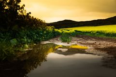 Artistic landscape with rape field Royalty Free Stock Images