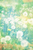 Artistic, natural background with flowers Stock Image