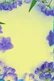 Artistic, natural background with flowers Stock Photos