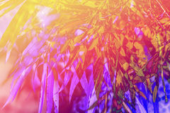 Artistic, natural background with plants Royalty Free Stock Images
