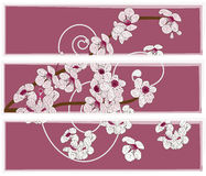 Artistic panel with cherry blossom flowers. Artistic panel or set of banners Royalty Free Stock Photography