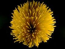 Artistic Pasta XI (Serie) Stock Image