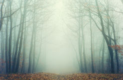 Artistic photo of a misty forest with leafless trees.  Stock Image