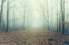 Artistic photo of a misty forest road with bare trees Stock Photo