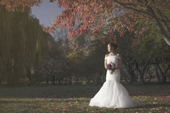 Artistic picture of bride in wedding gown Royalty Free Stock Images