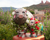 Artistic pigs decked with flowers in front of a store in sedona royalty free stock images