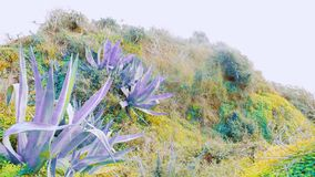 Artistic Portuguese plants - colourful royalty free stock photos