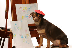 Artistic pooch Stock Photo
