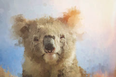 Artistic portrait of koala looking through stained dirty glass Royalty Free Stock Image