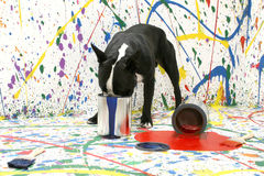 Artistic Pup Royalty Free Stock Photography
