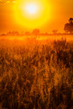 Artistic rendering of the glow of sunrise on Okavango grasslands Stock Photography