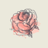Artistic rose Royalty Free Stock Photo