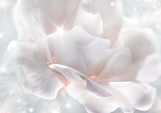 Artistic rose Royalty Free Stock Images