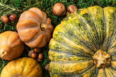 Artistic seasonal closeup top view of pumpkin, butternut and mushrooms stock images