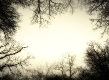 Artistic sepia image frame made from leafless trees of a misty f. Orest royalty free stock images