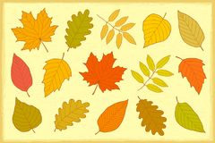 Set of hand drawn autumn leaves Royalty Free Stock Images