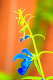 Artistic shot of blue flower Royalty Free Stock Photos