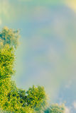 Artistic, Spring background with green leaves, blue sky and special blur effect Stock Images