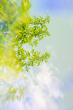 Artistic, Spring background with green leaves, blue sky and special blur effect Stock Photos