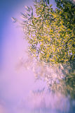Artistic, Spring background with green leaves, blue sky and special blur effect Stock Photo