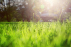 Artistic sunny blurry morning meadow details Stock Image