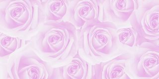 Artistic sweet beautiful soft pink roses texture. Stock Photography