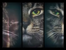 Artistic 3 frame tabby cat stock photography