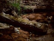 Fallen Log within a stream royalty free stock photography