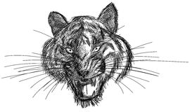 Artistic Tiger face isolated in grey tones. Image representing a face of tiger within grey tones Royalty Free Stock Photo