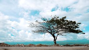 Artistic Tree after Disaster stock image