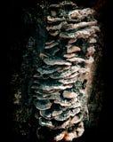 Artistic tree mushroom closeup. In Germany Royalty Free Stock Photography